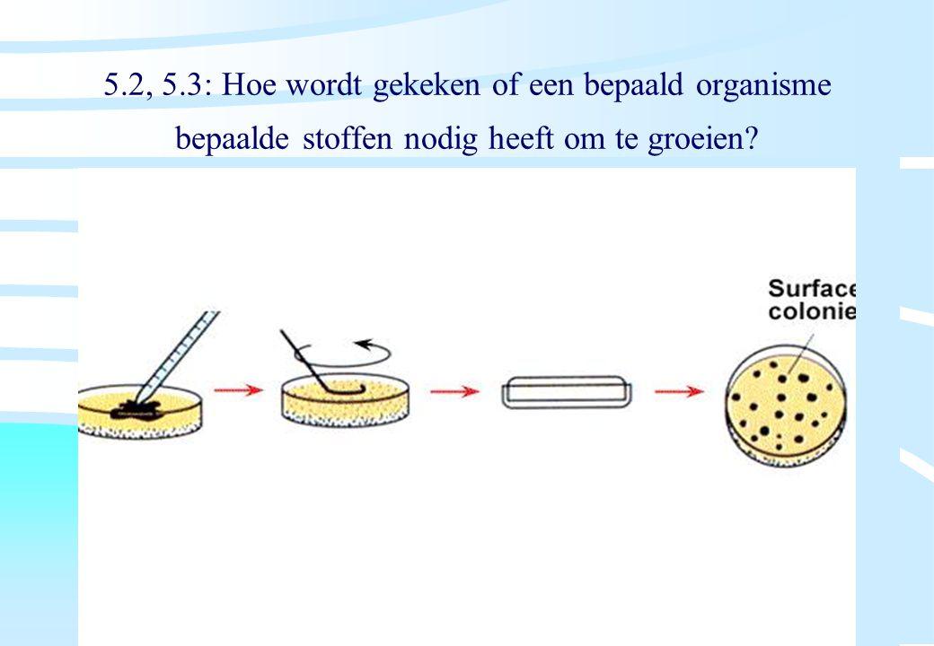 De microbiële cel, november 2008: colleges Westerhoff 5.2, 5.3: Hoe wordt gekeken of een bepaald organisme bepaalde stoffen nodig heeft om te groeien?
