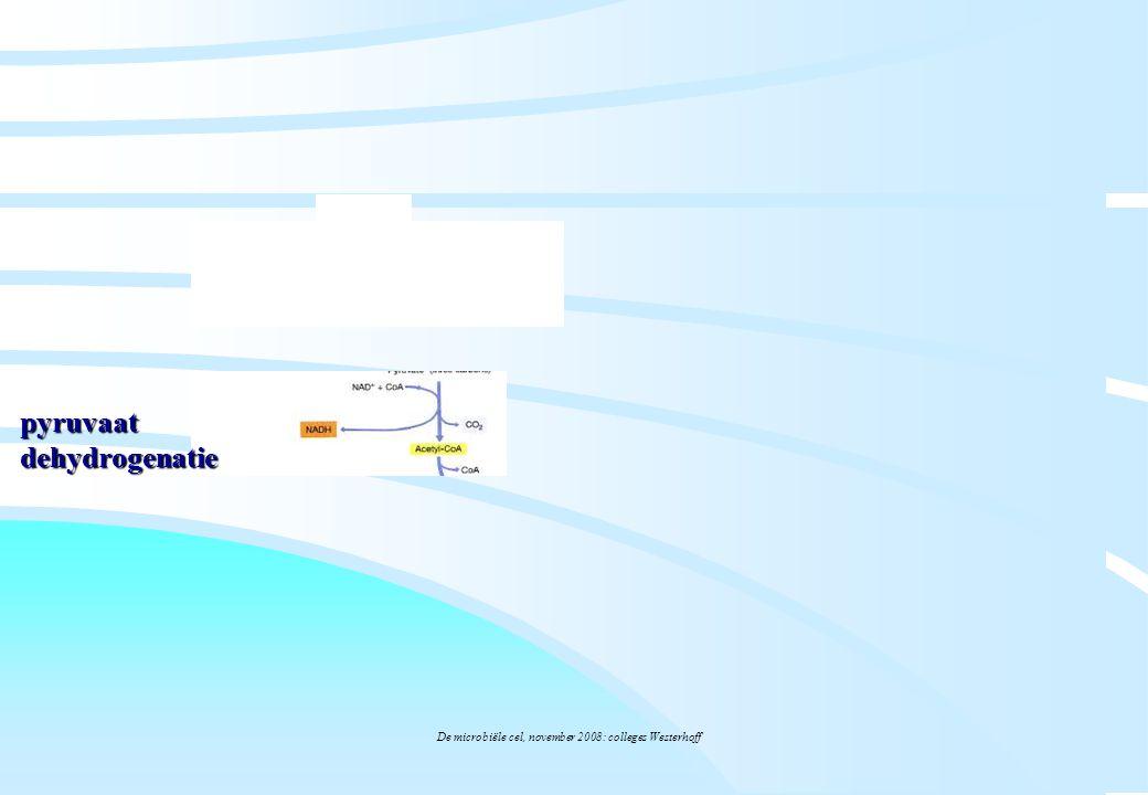 De microbiële cel, november 2008: colleges Westerhoff pyruvaat dehydrogenatie