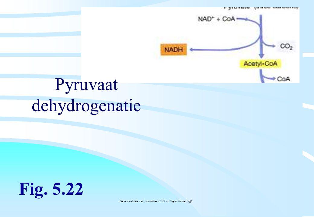 De microbiële cel, november 2008: colleges Westerhoff Pyruvaat dehydrogenatie Fig. 5.22