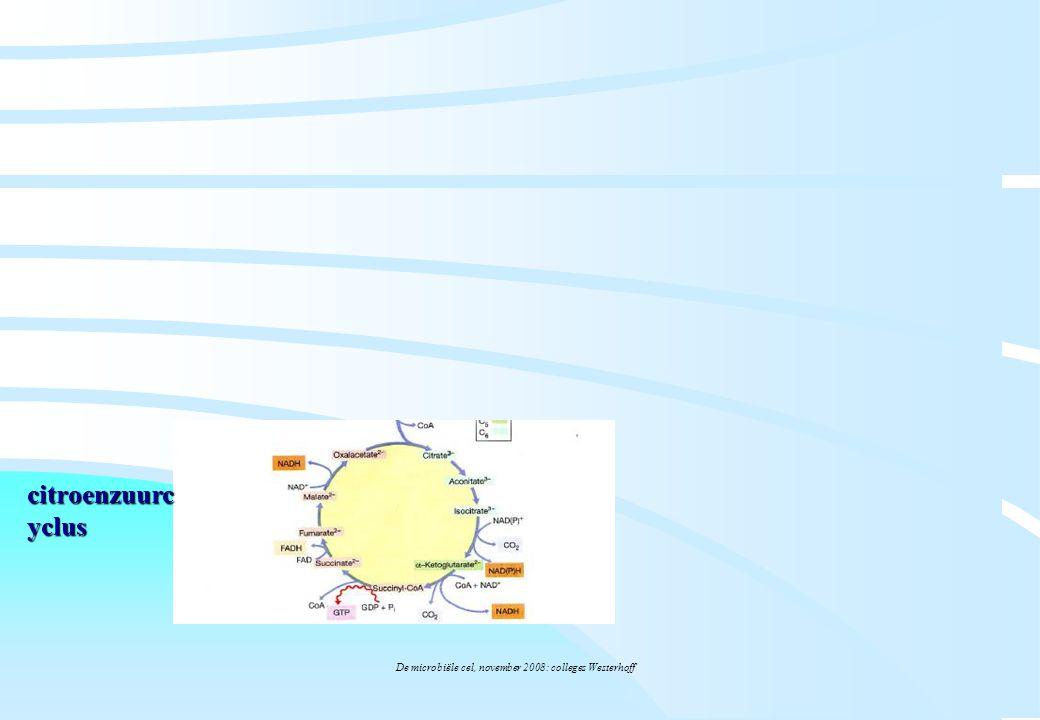 De microbiële cel, november 2008: colleges Westerhoff citroenzuurc yclus