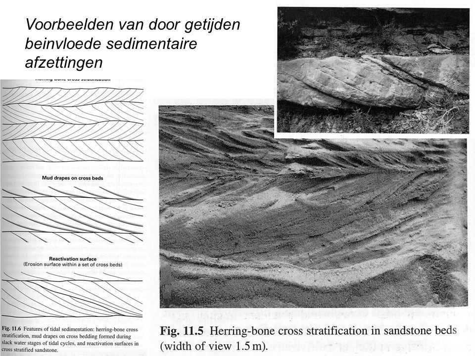 Voorbeelden van door getijden beinvloede sedimentaire afzettingen