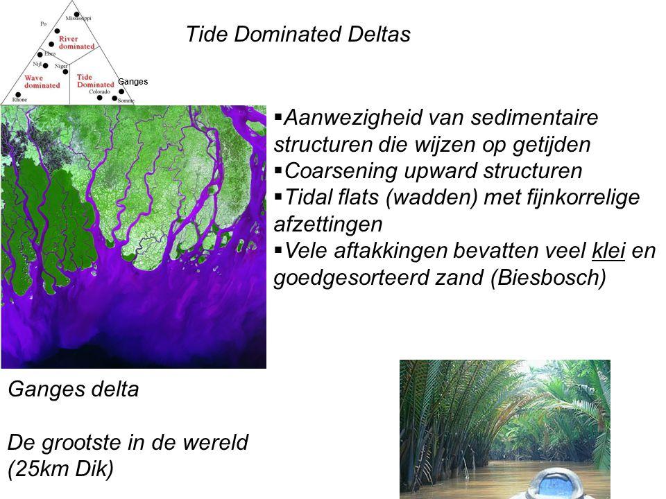 Tide Dominated Deltas Ganges Ganges delta De grootste in de wereld (25km Dik)  Aanwezigheid van sedimentaire structuren die wijzen op getijden  Coarsening upward structuren  Tidal flats (wadden) met fijnkorrelige afzettingen  Vele aftakkingen bevatten veel klei en goedgesorteerd zand (Biesbosch)
