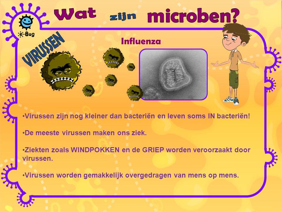 Influenza Virussen zijn nog kleiner dan bacteriën en leven soms IN bacteriën! De meeste virussen maken ons ziek. Ziekten zoals WINDPOKKEN en de GRIEP