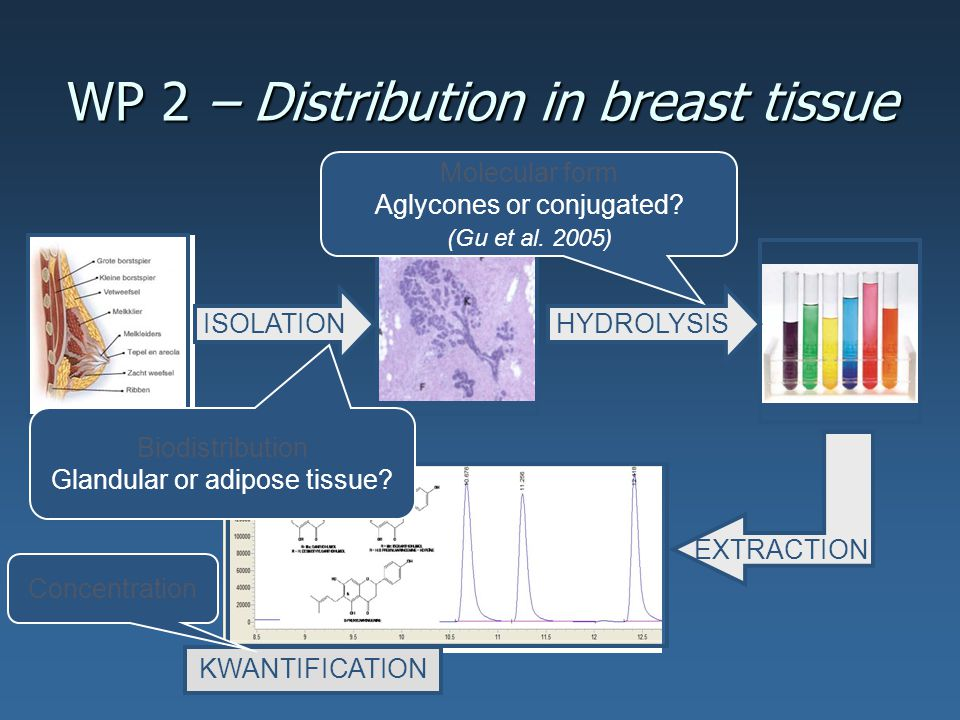 WP 2 – Distribution in breast tissue ISOLATIONHYDROLYSIS Molecular form Aglycones or conjugated.