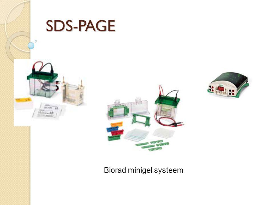 SDS-PAGE Biorad minigel systeem