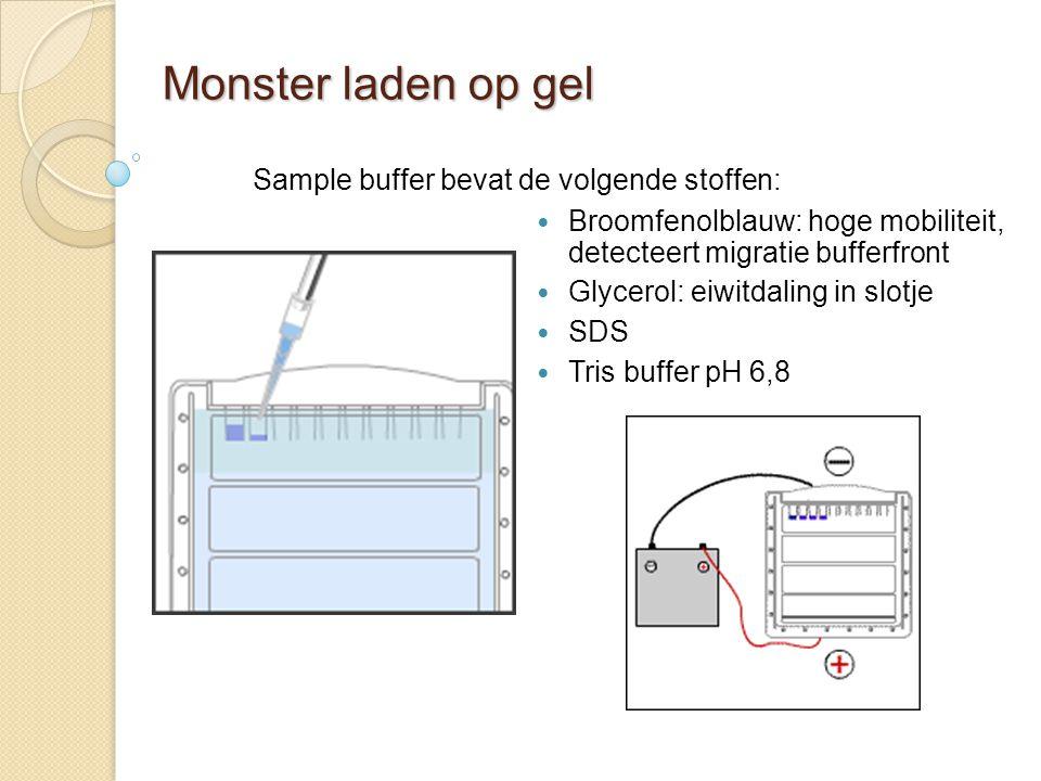 Monster laden op gel Sample buffer bevat de volgende stoffen: Broomfenolblauw: hoge mobiliteit, detecteert migratie bufferfront Glycerol: eiwitdaling