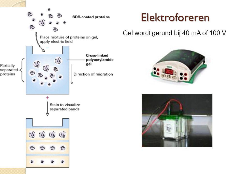 Elektroforeren Gel wordt gerund bij 40 mA of 100 V