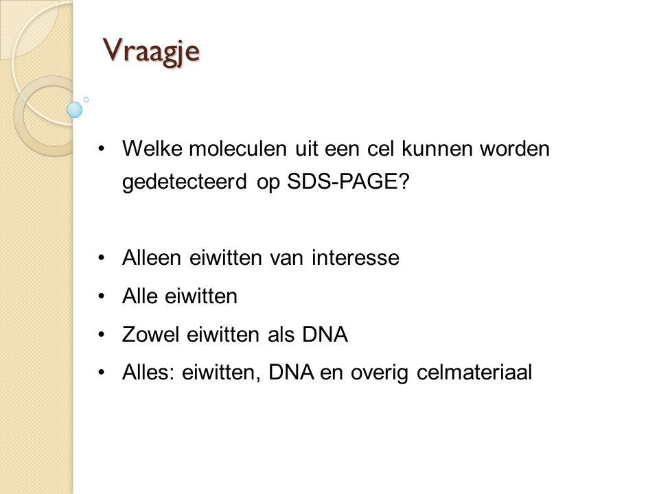 Vraagje Welke moleculen uit een cel kunnen worden gedetecteerd op SDS-PAGE? Alleen eiwitten van interesse Alle eiwitten Zowel eiwitten als DNA Alles:
