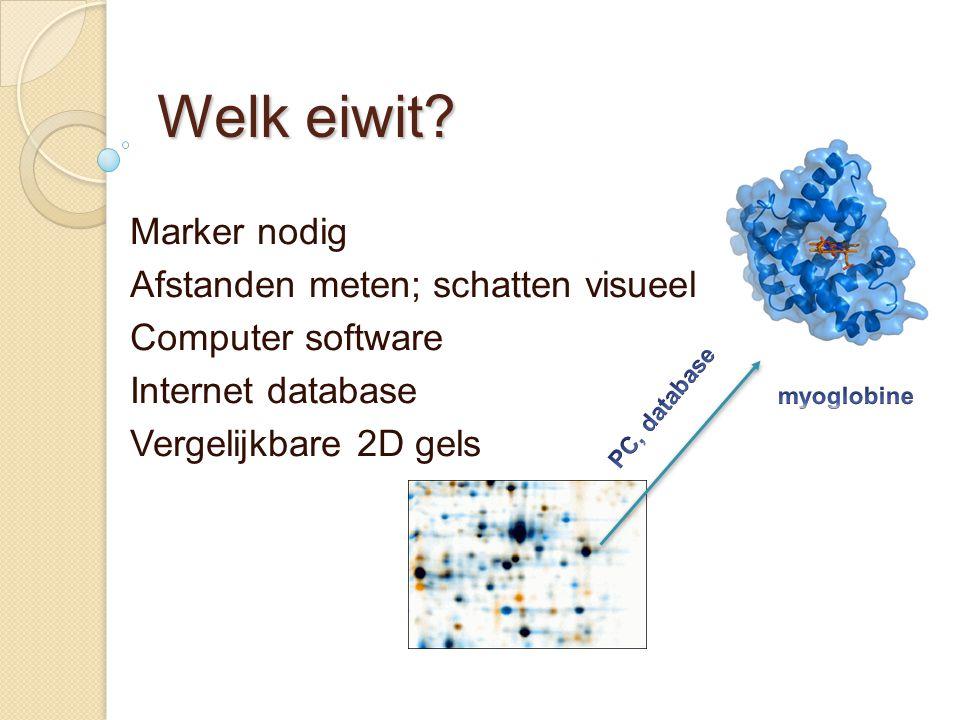 Welk eiwit? Marker nodig Afstanden meten; schatten visueel Computer software Internet database Vergelijkbare 2D gels