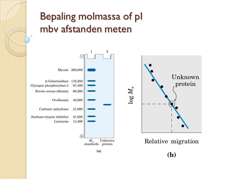 Bepaling molmassa of pI mbv afstanden meten