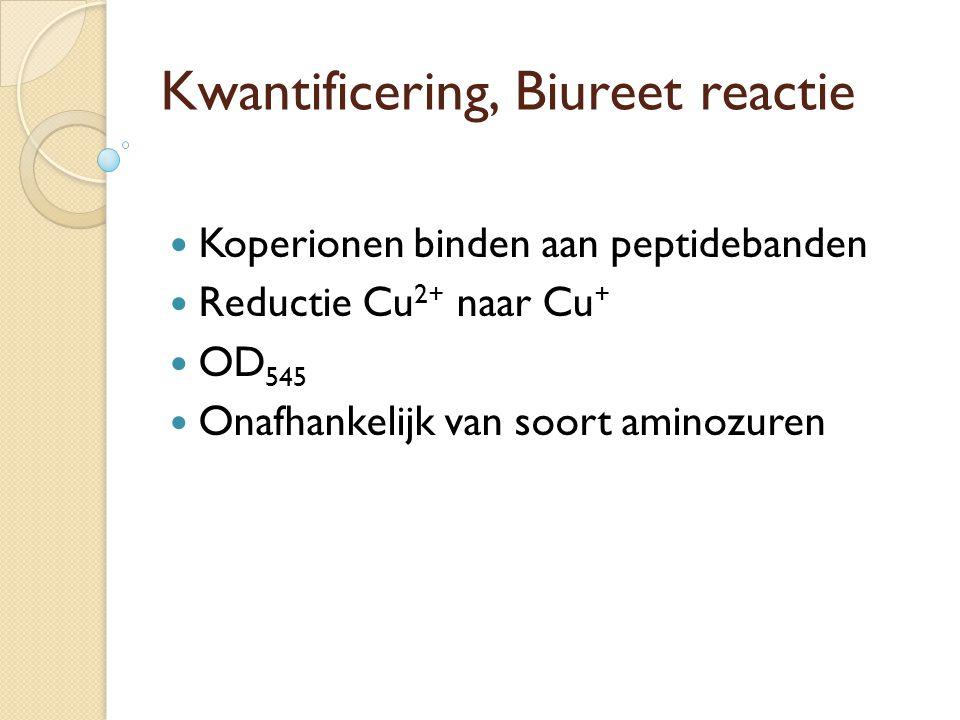 Fixatie en kleuring Kleurmethoden: Coomassie Brilliant Blue R250 (CBB), hergebruik mogelijk ◦ CBB in water/methanol/ijsazijn (detectiegrens is 0,2-0,5 ug eiwit) ◦ Snellere, groffere, slechtere kleuring: CBB in trichloorazijnzuur ◦ Ontkleuring met isopropanol of methanol in azijnzuur Zilverkleuring ◦ 10 tot 100 x gevoeliger dan CBB ◦ Kleuring niet voor alle eiwitten lineair met concentratie Fluorescerende labels aan eiwitten gekoppeld Radioactieve labels aan eiwitten gekoppeld Immunologische detectie (Western blot) Detectie van enzymen (in H05PBM: 4CIN/waterstofperoxide oplossing  toont alleen peroxidase enzym aan) Fixatie om bandverbreding door diffusie tegen te gaan