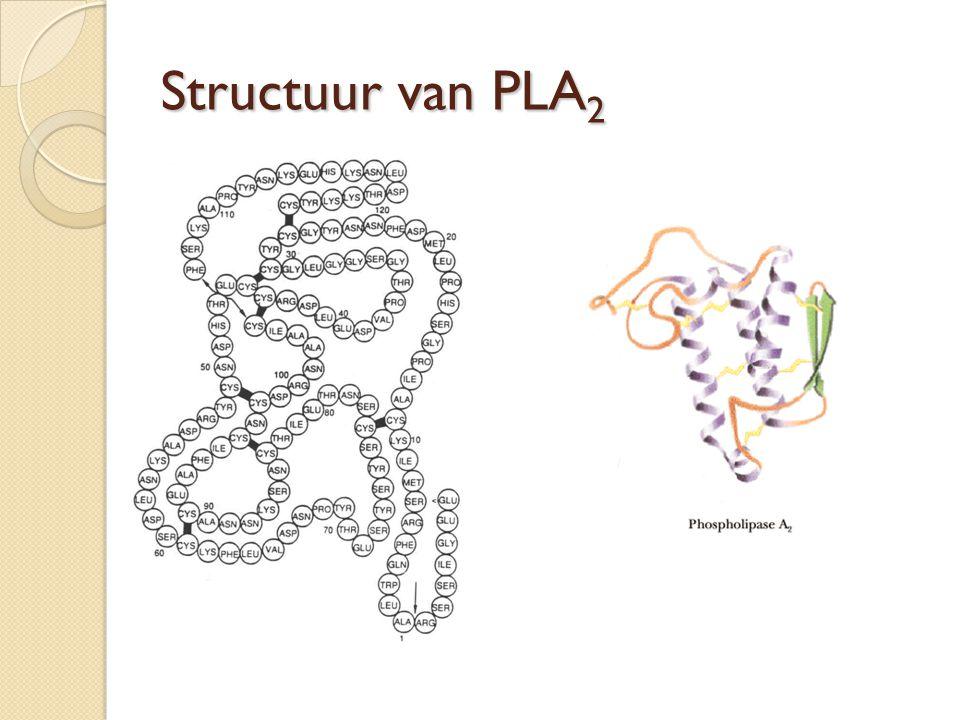 Enzymatische activiteit van PLA 2