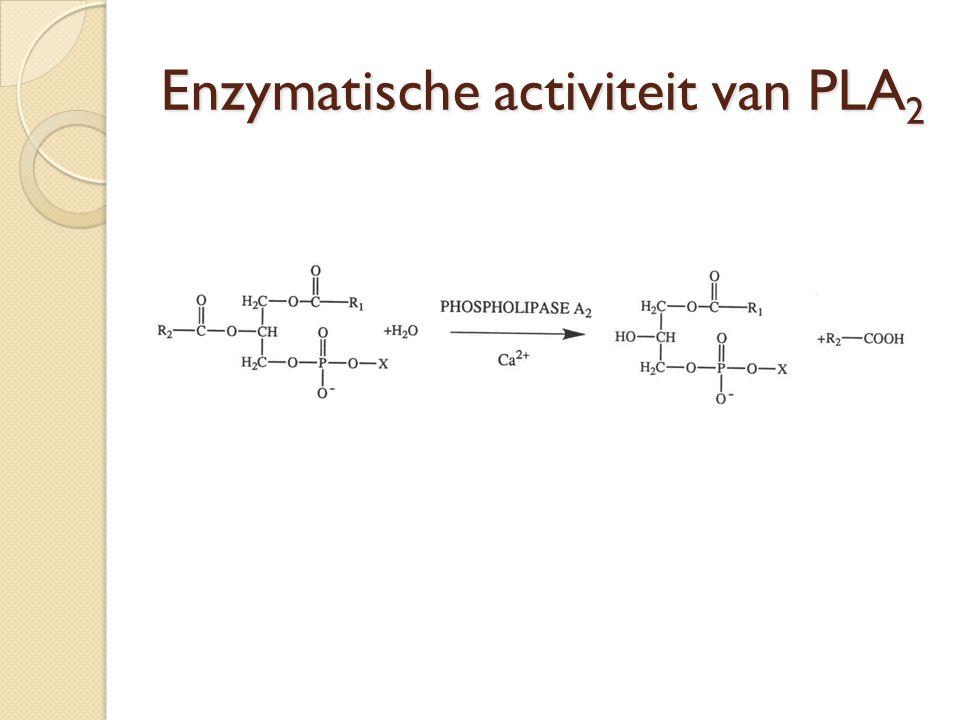 Schema eiwitzuivering van PLA 2 uit E.coli Homogenisatie + centrifugatie bacteriecellen Centrifugatie + eiwitten PLA 2 in eiwitmengsel Ionchromatografie (bij pH 4) Dialyse Ionchromatografie (bij pH 6) Dialyse FPLC