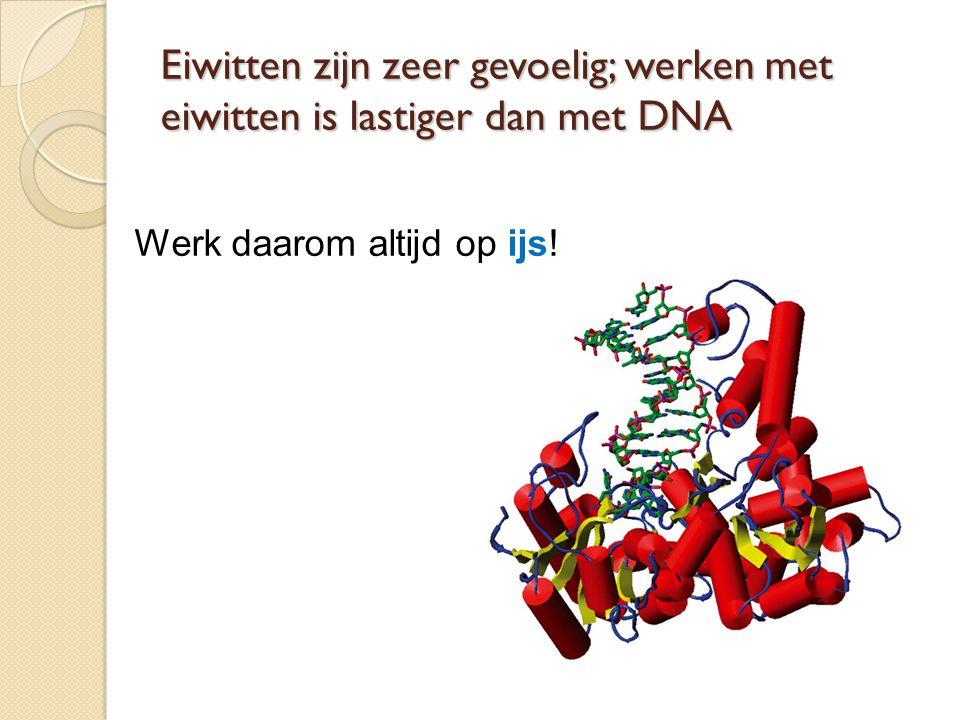 Eiwitten zijn zeer gevoelig; werken met eiwitten is lastiger dan met DNA Werk daarom altijd op ijs!
