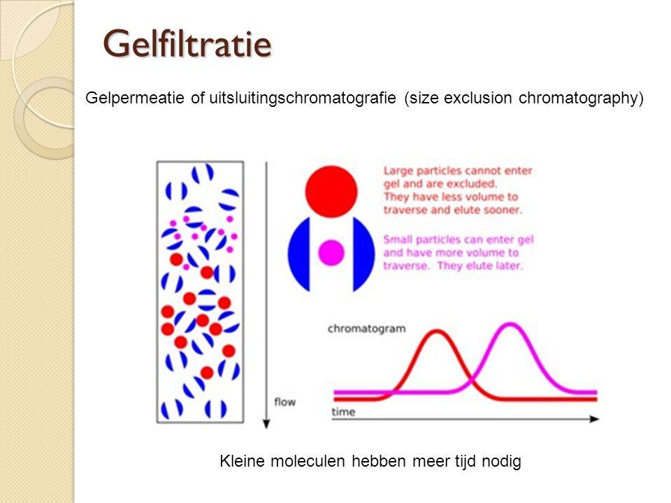Gelfiltratie Kleine moleculen hebben meer tijd nodig Gelpermeatie of uitsluitingschromatografie (size exclusion chromatography)