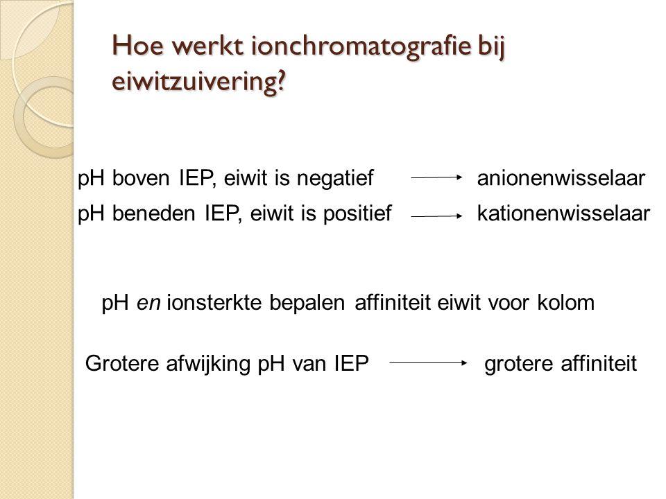 pH boven IEP, eiwit is negatiefanionenwisselaar pH beneden IEP, eiwit is positiefkationenwisselaar pH en ionsterkte bepalen affiniteit eiwit voor kolo