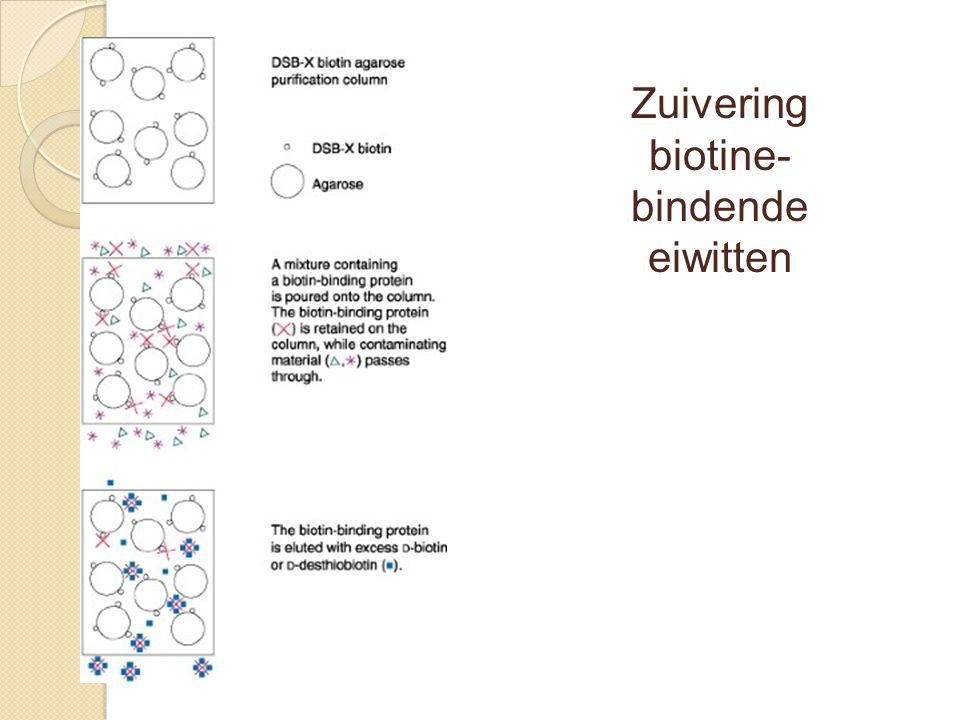 Zuivering biotine- bindende eiwitten