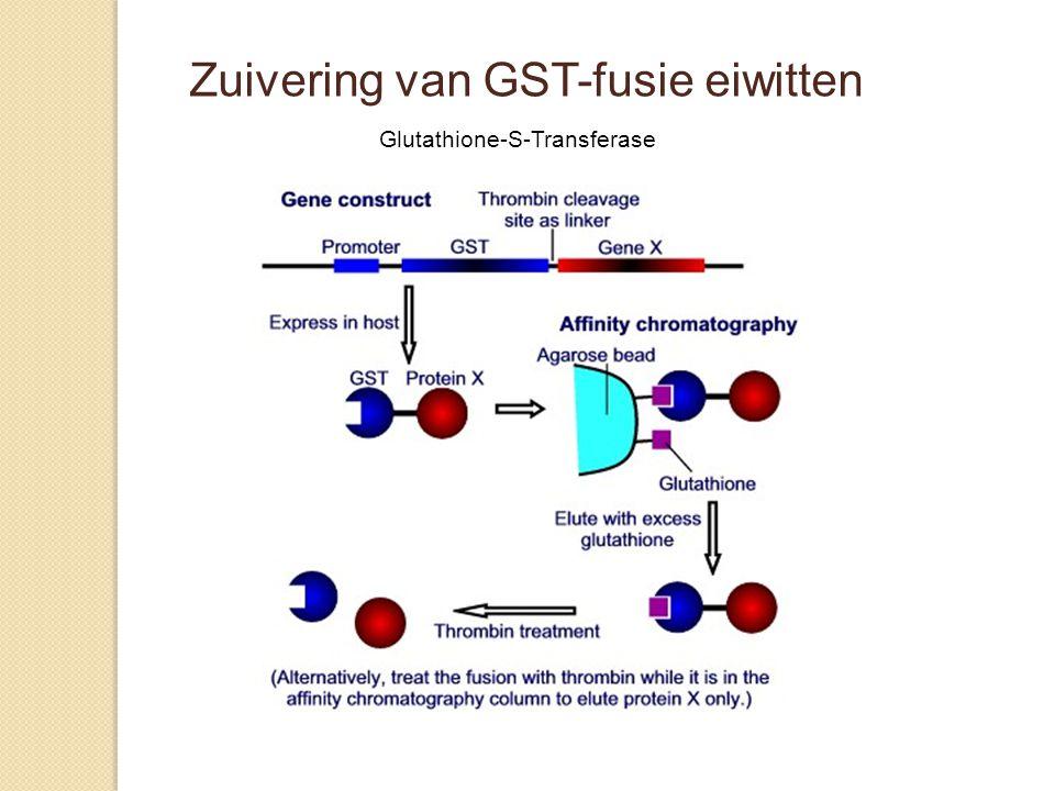 Zuivering van GST-fusie eiwitten Glutathione-S-Transferase