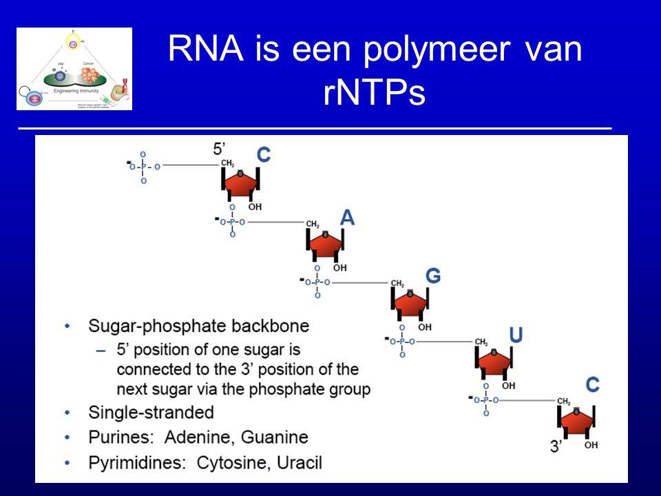 RNA is een polymeer van rNTPs