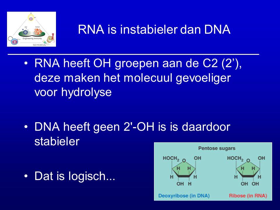 RNA is instabieler dan DNA RNA heeft OH groepen aan de C2 (2'), deze maken het molecuul gevoeliger voor hydrolyse DNA heeft geen 2'-OH is is daardoor