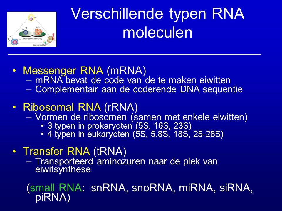 Verschillende typen RNA moleculen Messenger RNA (mRNA) –mRNA bevat de code van de te maken eiwitten –Complementair aan de coderende DNA sequentie Ribo