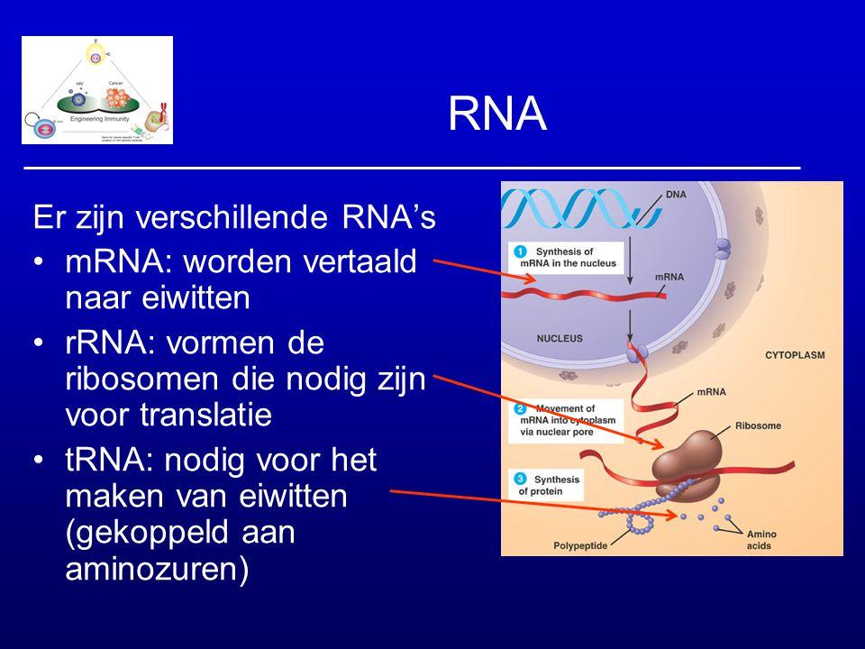 RNA Er zijn verschillende RNA's mRNA: worden vertaald naar eiwitten rRNA: vormen de ribosomen die nodig zijn voor translatie tRNA: nodig voor het make
