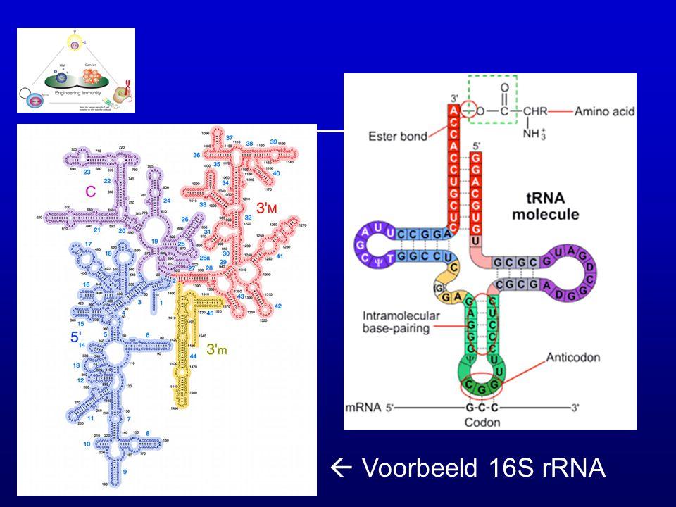  Voorbeeld 16S rRNA