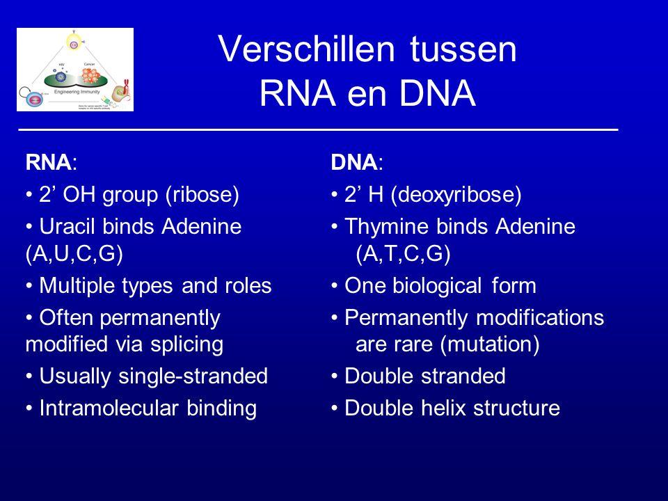 Verschillen tussen RNA en DNA RNA: 2' OH group (ribose) Uracil binds Adenine (A,U,C,G) Multiple types and roles Often permanently modified via splicin