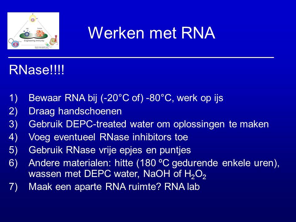 Werken met RNA RNase!!!! 1)Bewaar RNA bij (-20°C of) -80°C, werk op ijs 2)Draag handschoenen 3)Gebruik DEPC-treated water om oplossingen te maken 4)Vo