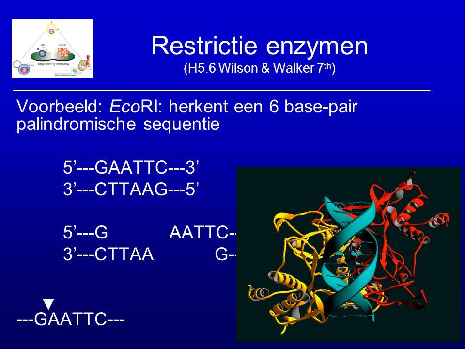 Restrictie enzymen (H5.6 Wilson & Walker 7 th ) Voorbeeld: EcoRI: herkent een 6 base-pair palindromische sequentie 5'---GAATTC---3' 3'---CTTAAG---5' 5