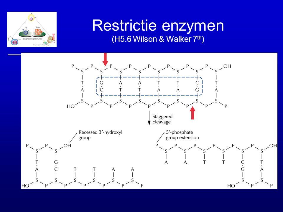 Restrictie enzymen (H5.6 Wilson & Walker 7 th )
