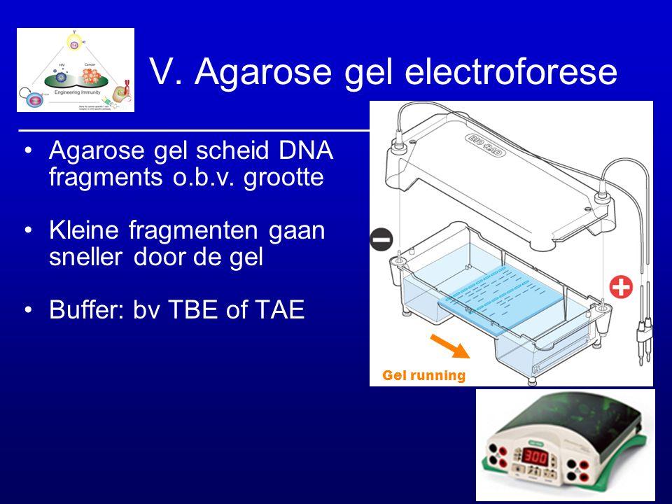 Gel running V. Agarose gel electroforese Agarose gel scheid DNA fragments o.b.v. grootte Kleine fragmenten gaan sneller door de gel Buffer: bv TBE of