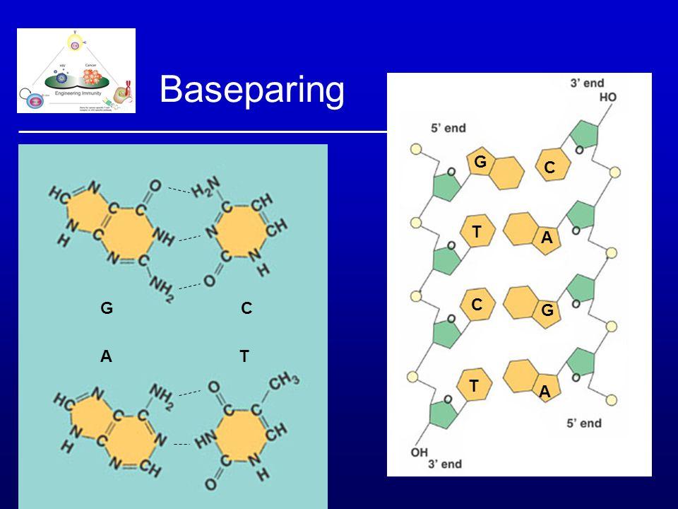DNA isolatie: silica membraan - Homogeniseren (lyseren, met zout) - Centrifugeren -Elueren (laag- zout) Roche, Fermentas