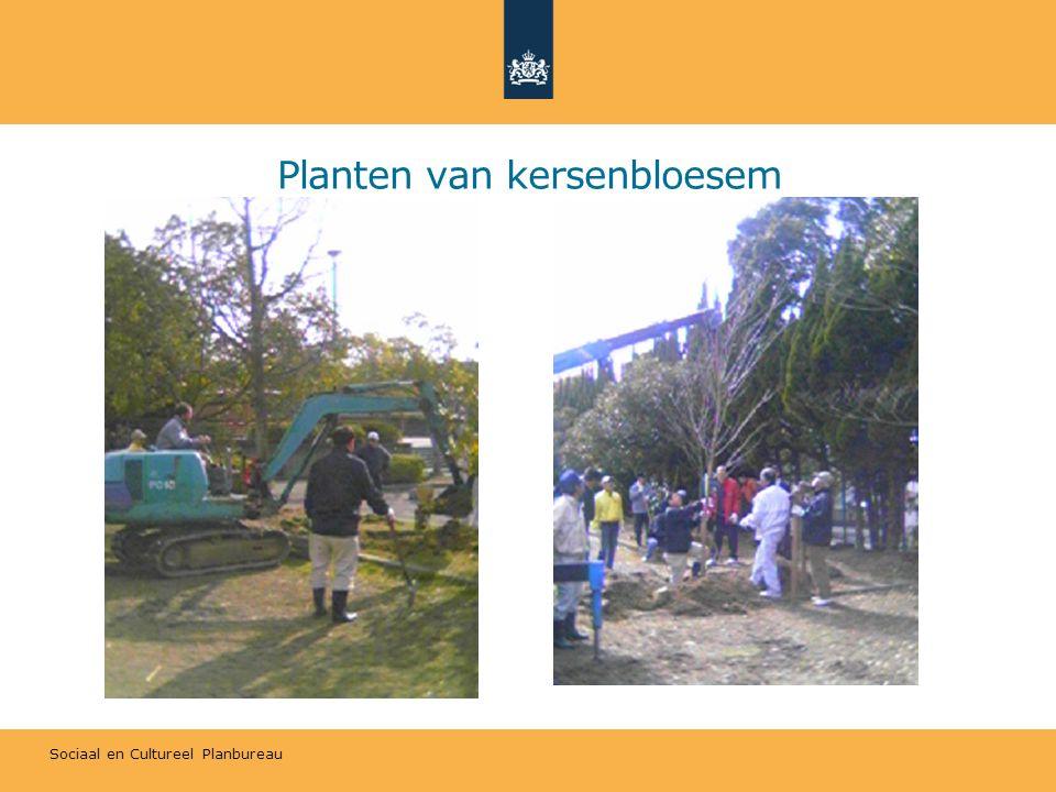 Sociaal en Cultureel Planbureau Planten van kersenbloesem
