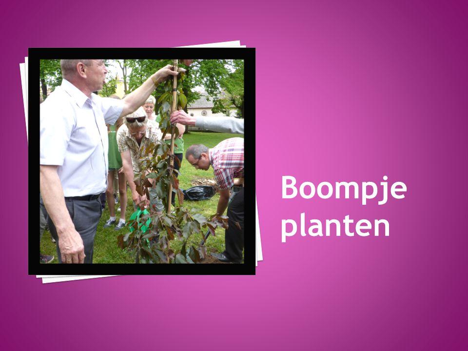 Boompje planten