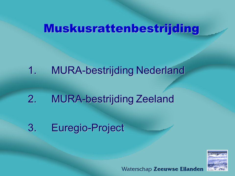 Muskusrattenbestrijding 1.MURA-bestrijding Nederland 2.MURA-bestrijding Zeeland 3.Euregio-Project