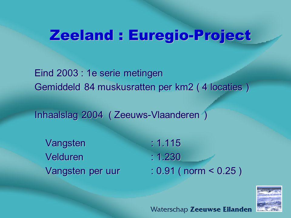 Zeeland : Euregio-Project Eind 2003 : 1e serie metingen Gemiddeld 84 muskusratten per km2 ( 4 locaties ) Inhaalslag 2004 ( Zeeuws-Vlaanderen ) Vangste