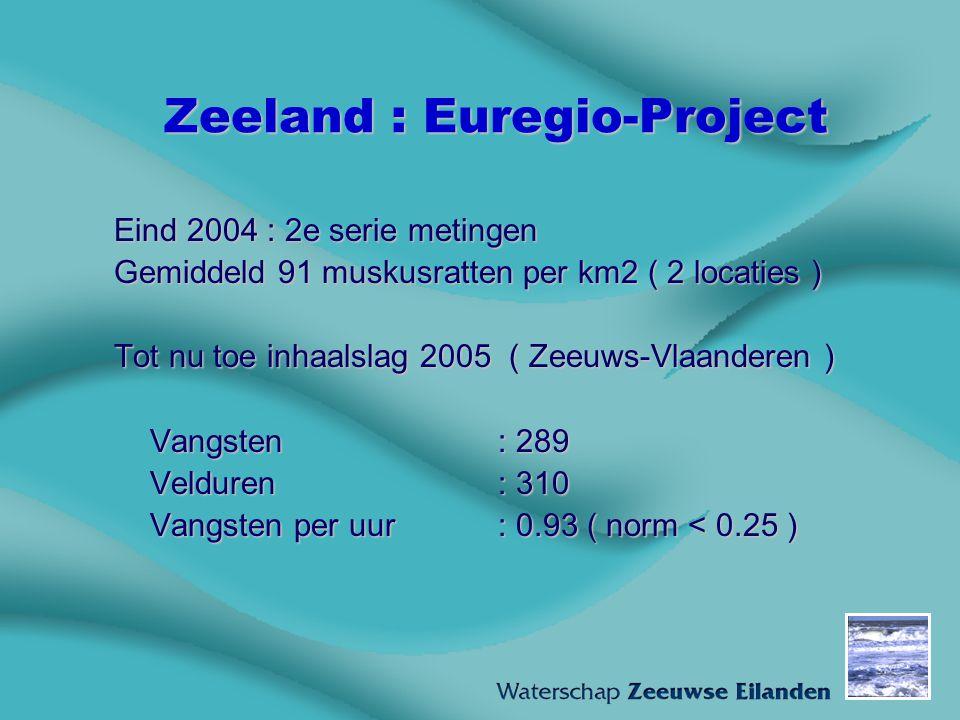 Zeeland : Euregio-Project Eind 2004 : 2e serie metingen Gemiddeld 91 muskusratten per km2 ( 2 locaties ) Tot nu toe inhaalslag 2005 ( Zeeuws-Vlaandere