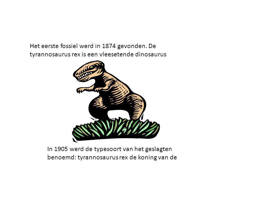 Het eerste fossiel werd in 1874 gevonden. De tyrannosaurus rex is een vleesetende dinosaurus In 1905 werd de typesoort van het geslagten benoemd: tyra