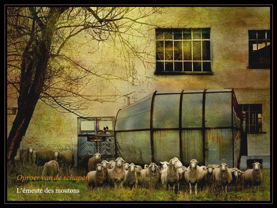Oproer van de schapen L'émeute des moutons