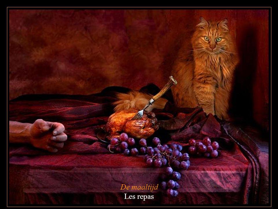 De maaltijd Les repas