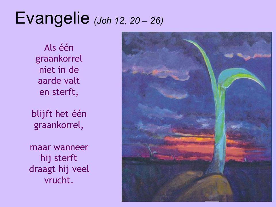 Evangelie (Joh 12, 20 – 26) Als één graankorrel niet in de aarde valt en sterft, blijft het één graankorrel, maar wanneer hij sterft draagt hij veel v
