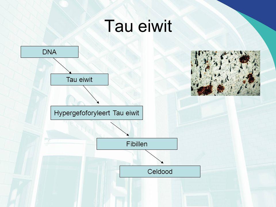 Tau eiwit DNA Tau eiwit Hypergefoforyleert Tau eiwit Fibillen Celdood