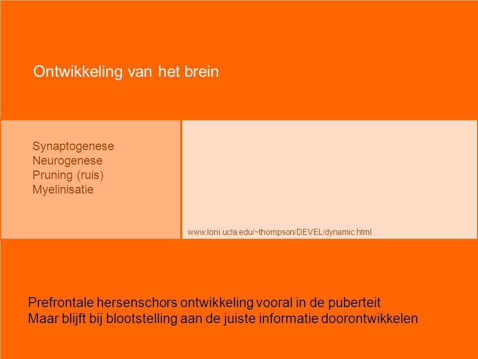 Synaptogenese Neurogenese Pruning (ruis) Myelinisatie Ontwikkeling van het brein www.loni.ucla.edu/~thompson/DEVEL/dynamic.html Prefrontale hersenscho