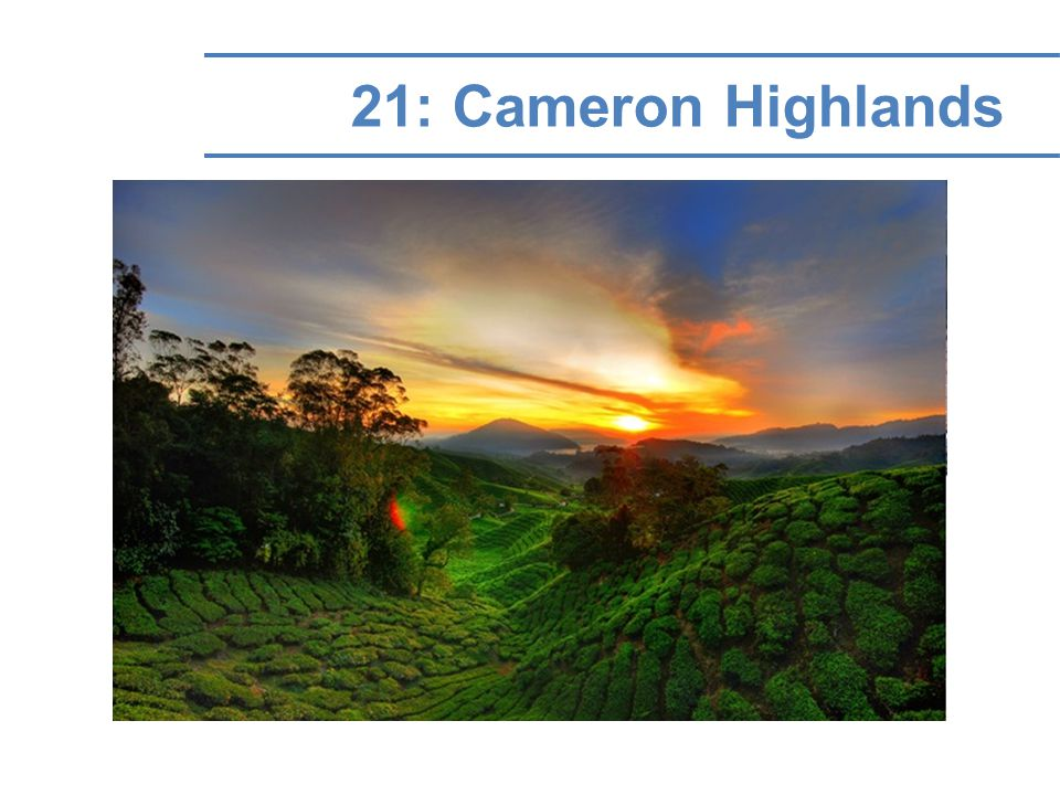 21: Cameron Highlands
