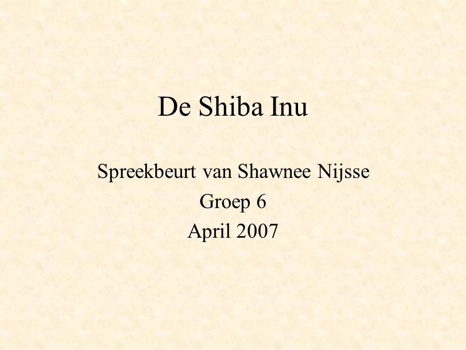 De Shiba Inu Spreekbeurt van Shawnee Nijsse Groep 6 April 2007