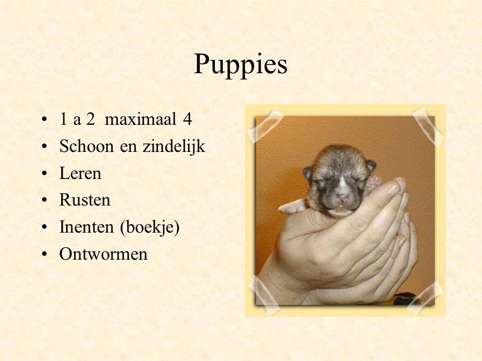 Puppies 1 a 2 maximaal 4 Schoon en zindelijk Leren Rusten Inenten (boekje) Ontwormen