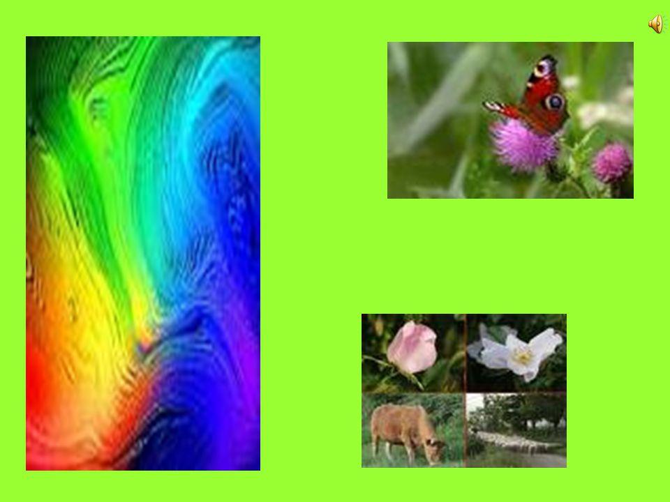 Wij moeten in harmonie samenleven met de natuur 