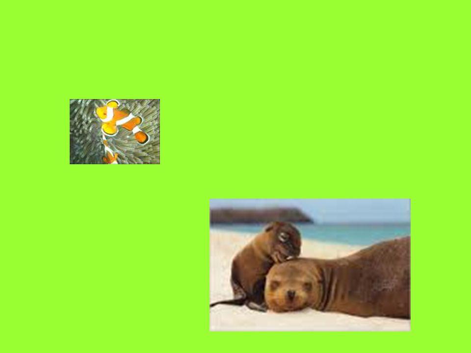 In opdracht van: Fons Vandormael Religie, Zingeving en Levensbeschouwing Storytelling: Mens versus Natuur Gwendoline Horemans 1BaTP-AO Gebruikte afbeeldingen gevonden op het internet Muziek: Enya – Titanic Gedicht: http://www.goverdina.nl/gedichtennatuur.html