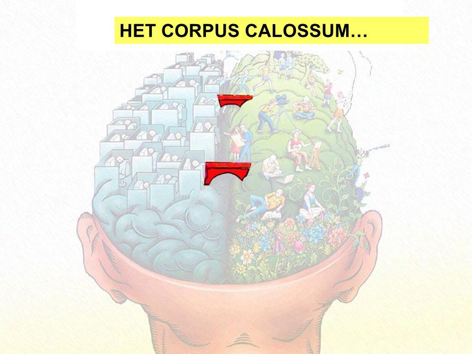 HET CORPUS CALOSSUM…